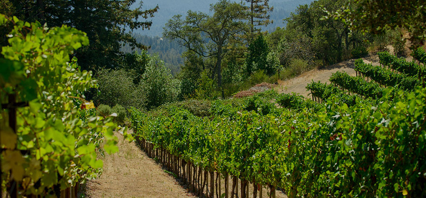 We Grow 36 Acres Of Ultra Premium Chardonnay And Cabernet Other Bordeaux Varietals In Alexander Valley